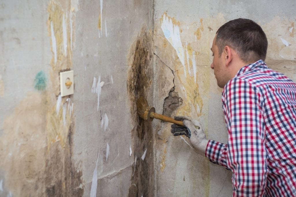 mold removal service, mold remediation, mold remediation services near me