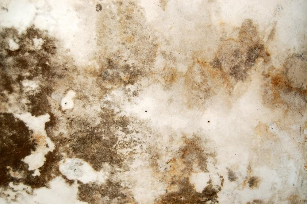 How Mold Can Put Your Home in Danger