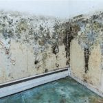 How to Remove Mold From a Interior Wall