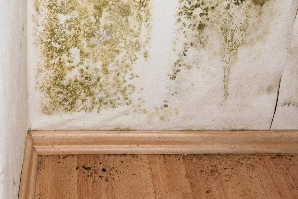 Indoor Mold and Health Effects